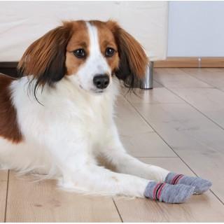 B.O.T. DOG RUGH STANDARD 43 cm