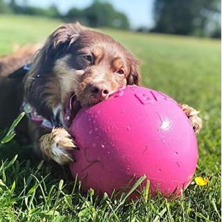 B.O.T. DOG RUGH STANDARD 52 cm